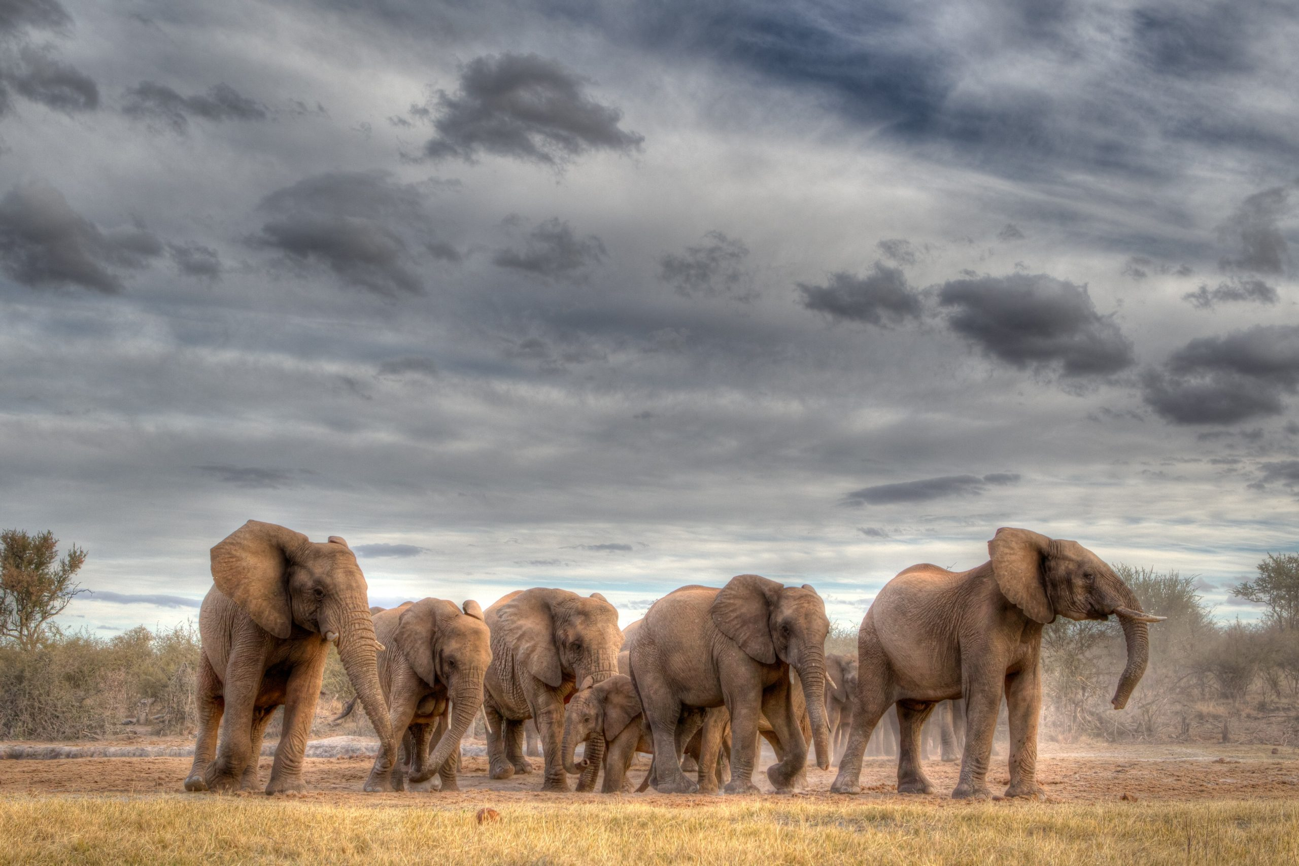 Read more about the article Herding Elephants